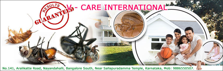 V - CARE INTERNATIONAL